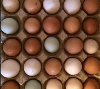 Eggs for guests - Lower Keats Glamping Devon